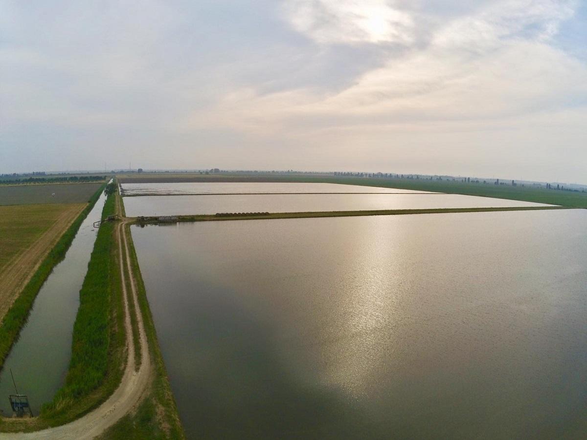 """Immagine con drone risaie allagate. (Foto gentilmente concessa dalla """"Soc. Agr. Moretto"""" di Porto Tolle)"""