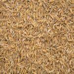 Lolla di riso